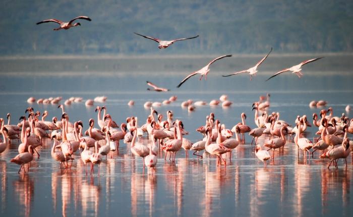 4 days Masai Mara & Lake Nakuru group joining Safari