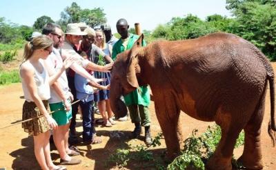 David Sheldrick Elephant Orphanage & Giraffe Center Day Tour