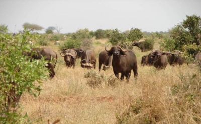 9 Days Masai Mara, Nakuru, Naivasha, Amboseli , Tsavo West & Tsavo East Safari