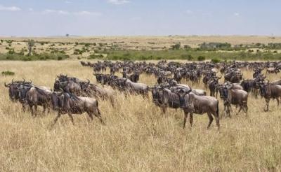 3 day Masai Mara Group joining safari