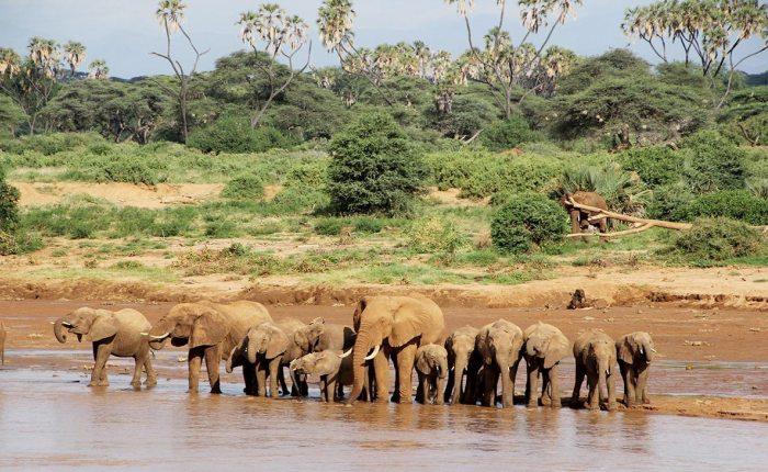 13 Days Best Of Kenya Wildlife Safari Trail