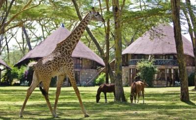 5 Days Masai Mara, Lake Nakuru & Lake Naivasha Safari
