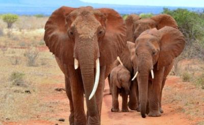 6 Days Amboseli, Lake Nakuru & Masai Mara Safari