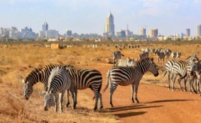 Nairobi National Park Half Day Tour